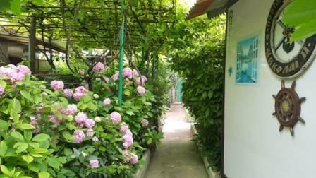 Лабиринты во дворе у Николая в Хосте