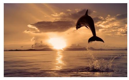 Дельфин в Хосте